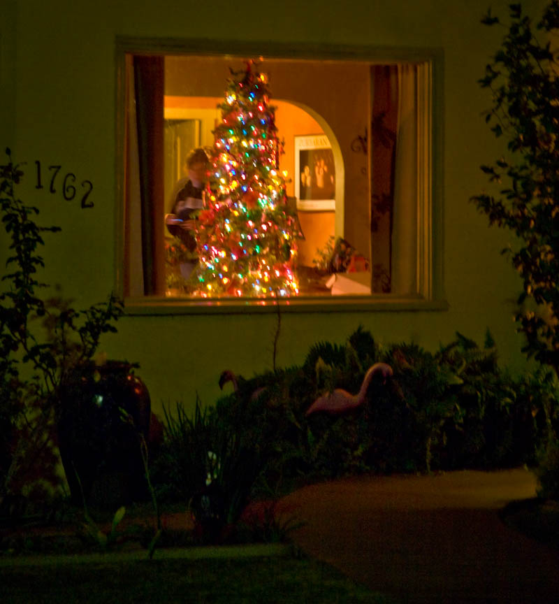 Tree in the Window