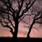 Oak Trees, #63