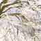 Yosemite Winter, #380